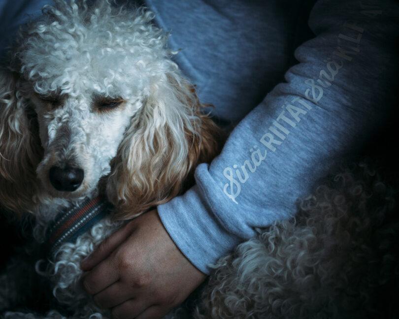 Koira ja ihmisen käsi
